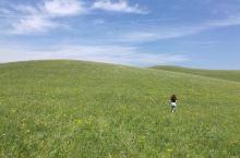 这是蒙古的大草原,来到这里看到的一望无垠的草原,心情一下子就开拓了,也非常的敞亮,在这里满眼的绿色,
