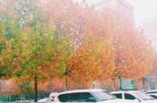 梧桐树,好美呀