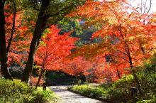 「德川园」的枫叶美景!