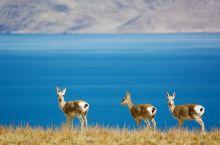 让我带您去西藏阿里走进神山圣湖