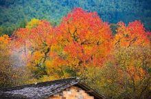 """塔川又名塔上,隶属于黟县宏村镇。是一个独具魅力的山间村落,""""溪绕前屋""""、""""竹山莺啼""""、""""塔川洞天""""等"""