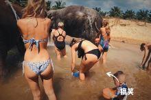 与大象和谐共处
