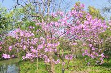 春日赏花花,西溪花朝节