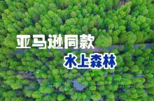 0元打卡亚马逊同款水上森林,杭州地铁直达