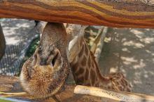 版纳野生动物园
