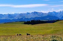 北疆之行第五站——喀拉骏草原
