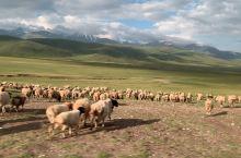 羊群啊羊群