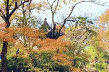 苏州|沉醉古典园林·中国四大名园·拙政园