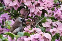花丛中的鸟巢~