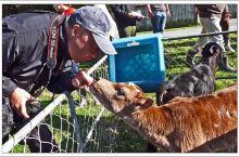 新西兰 惠灵顿 农场开放日