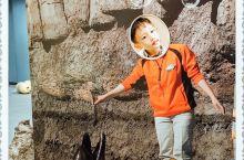 名古屋港水族馆|与海洋生物的约会