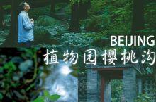 北京旅游必打卡植物园樱桃沟初秋人少景美