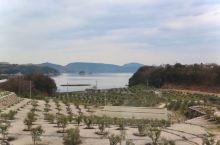 井上誠耕园是岛上种植橄榄和柑橘的农庄, 有直营的餐厅,也可以买一些关于橄榄和小橘子的土特产——一言以