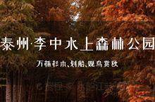 泰州·李中水上森林公园