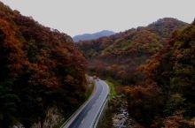最美秦岭红叶之路