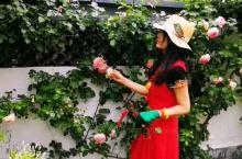 悦山水花园别墅酒店的花园