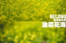 北京旅行|赏山间油菜花海 打卡密云黑龙潭