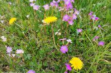 乌兰布统草原6月8日实拍图,美美哒