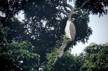 树上休憩的鸟