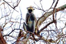 """雅拉国家公园,号称是""""小肯尼亚""""。有许多的野生动物,草原、森林、湖泊。车蜿蜒前行时,树丛中会看到大象"""
