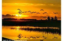 扎龙湿地位于松嫩平原西部乌裕尔河下游,巳无明显河道,与苇塘湖泊连成一体,然后流入龙虎泡、连环湖、南山
