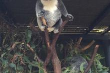 可以撸考拉的动物园