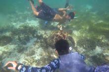 来菲律宾宿务,寻找骄傲的海龟吧!
