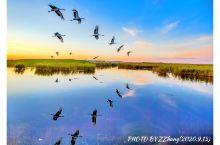 拍摄丹顶鹤的最佳季节 拍摄丹顶鹤一年四季都可以。春季.百花如织,芳香四野,是鹤的繁殖期.主要拍摄鹤蛋
