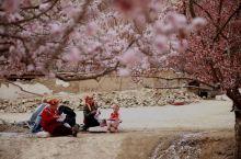 帕米尔高原早春最美的景物是怒放的杏花,在塔什库尔干县到大同乡的196公里高原峡谷中,这里分布着的十几