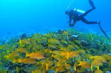 马尔代夫的海底王国 深南线船宿日记