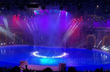 去波赛冬一定要看的海豚表演