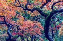 早秋-华盛顿公园植物园的色彩