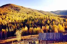 秋天来禾木绝对美爆