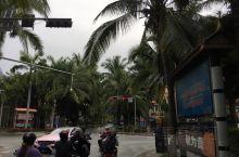 椰子树不一定在海边,不错不错