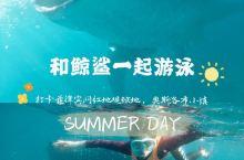打卡菲律宾网红观鲸地 和鲸鲨一起游泳