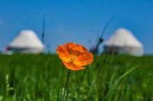 在路上发现壁纸一样的夏天.新疆那拉提空中草原.  那拉提草原是世界四大草原之一的亚高山草甸植物区,自