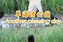 重庆绝美芦苇公园|草海湾公园