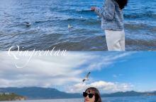 想看西伯利亚的海鸥10月开泸沽湖吧