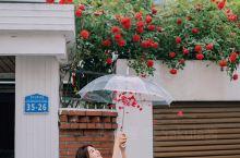 韩国首尔的蔷薇花