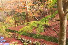养老公园的红叶美景