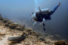 海岛旅游|马来西亚-仙本那-诗巴丹潜水