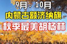 9月-10月内蒙古额济纳旗秋季最美胡杨林