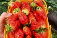 尚田中国草莓基地
