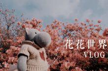 miniVLOG|龟峰山看花花世界