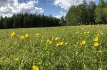 丰盛的牧草