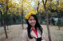 江南公园 满城尽带黄金甲...... 微微暖阳,一缕春风 正是踏青的好时节