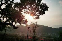井冈之旅,山泉民宿,民风淳朴,唇齿香筑。旭日东升,鸡犬相闻。薄雾朝阳,翠竹成林。明月松润,红歌轻曼。