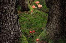 雨后山林中的红色菌菇
