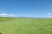 甘南:桑科草原