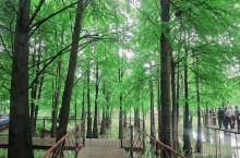 青山湖水上森林